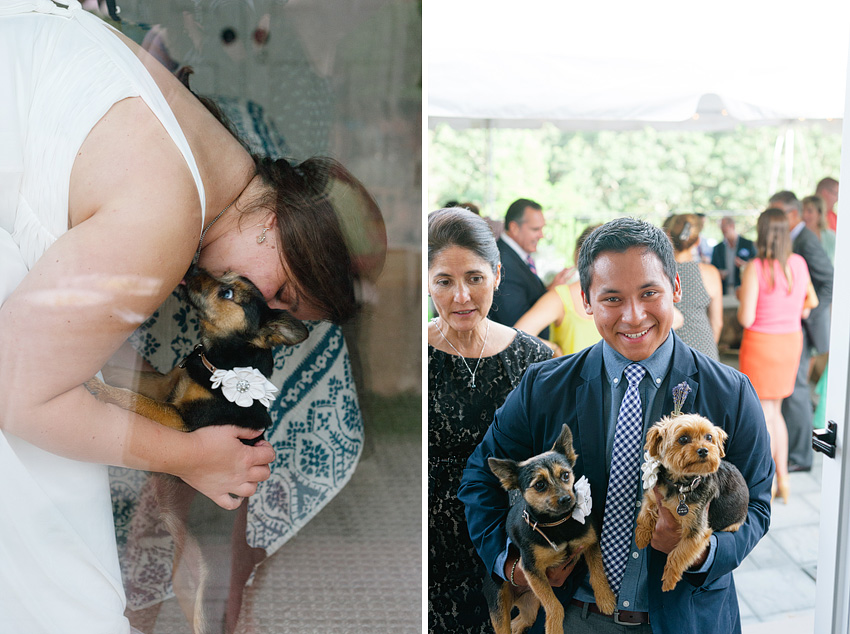 bride and wedding guest with dogs