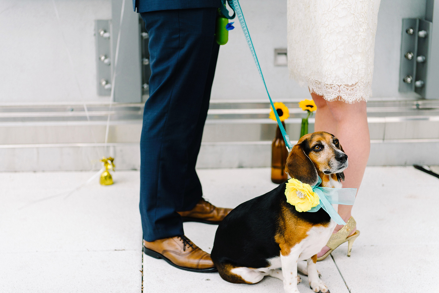 dog in wedding ceremony with flower collar