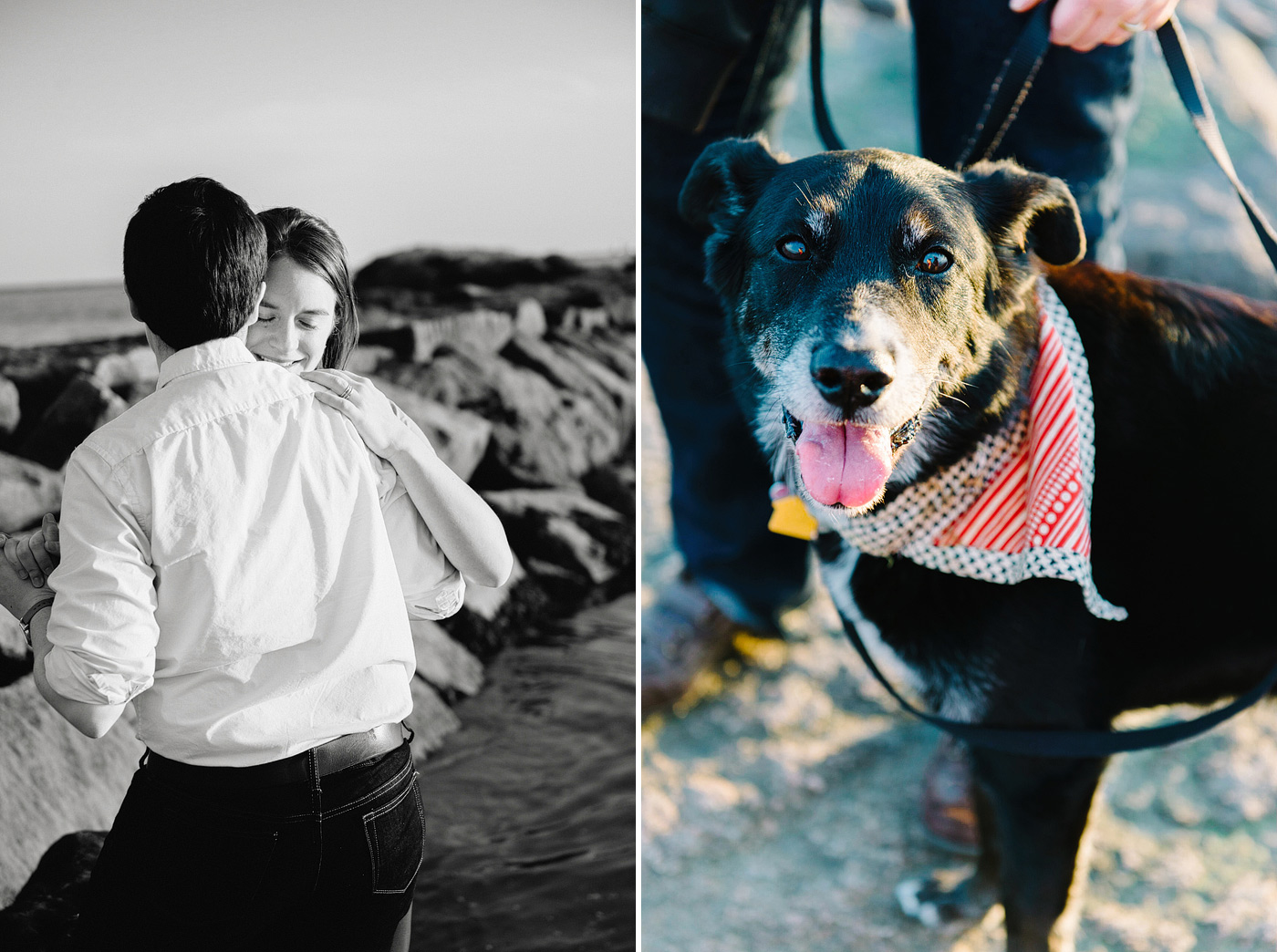 dog dressed up for Connecticut wedding