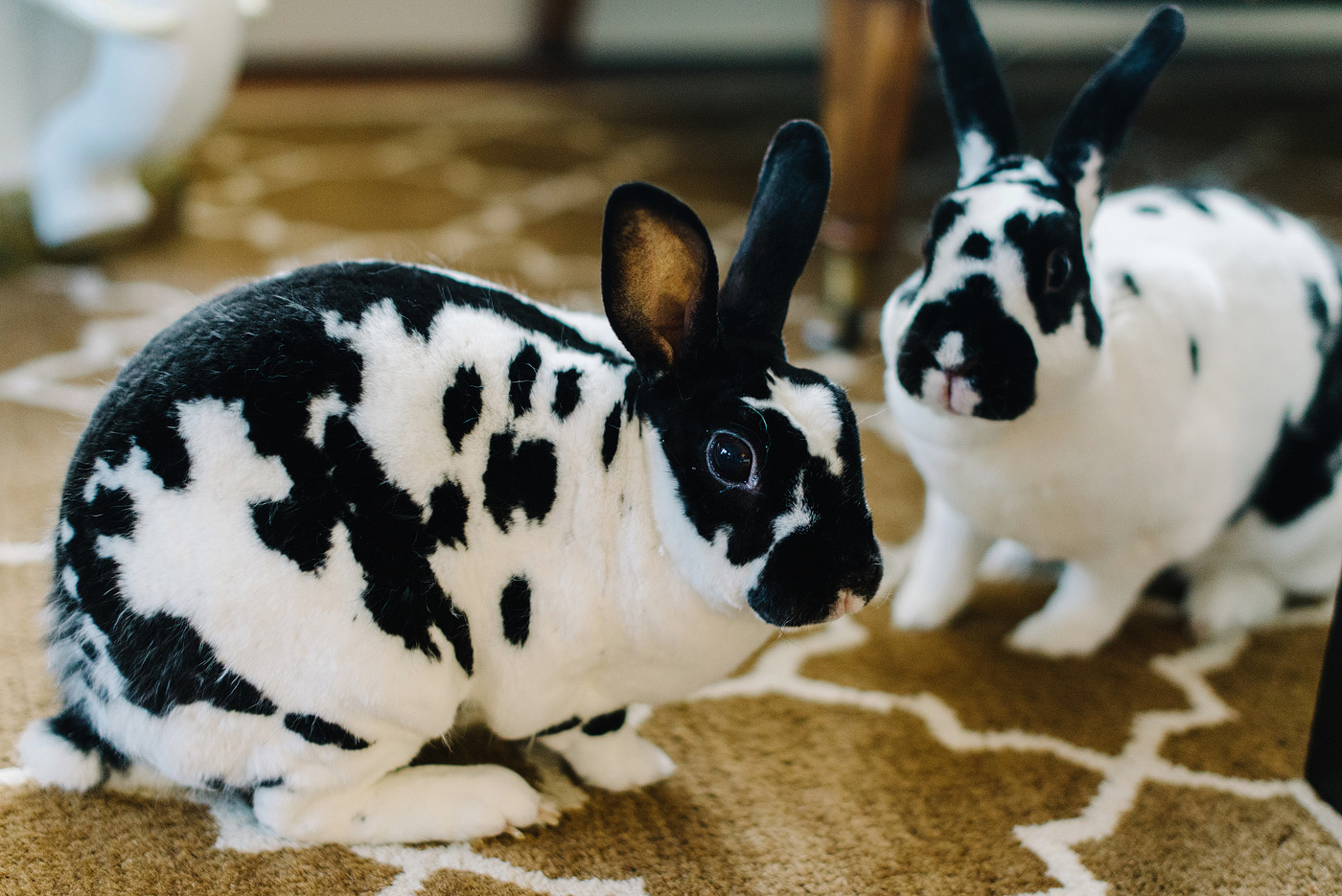february-adopt-a-rabbit-month-2